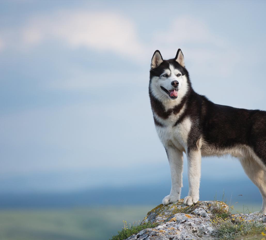 Petsupply - Hundmat & kattmat online